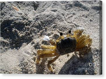 Canvas Print featuring the photograph Crab On The Look-out by Megan Dirsa-DuBois