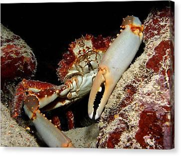 Crab Pose Canvas Print by Nina Banks