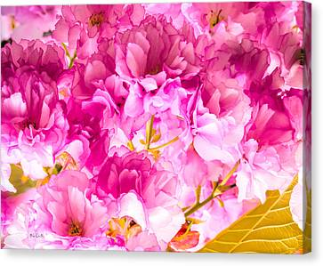 Crabapple Impressions 2 Canvas Print by Bob Orsillo