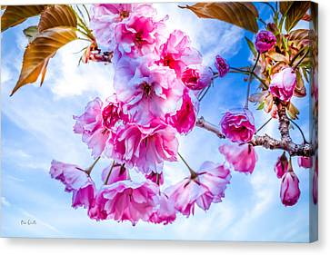 Crabapple Impressions Canvas Print by Bob Orsillo