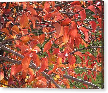 Crabapple Canvas Print by Kimberly Maxwell Grantier