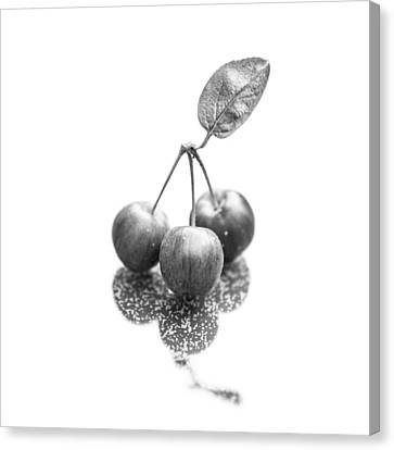Crabapple Monochrome Canvas Print by Semmick Photo