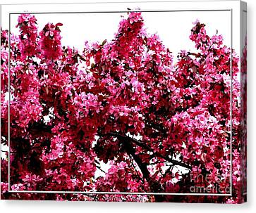 Crabapple Tree Blossoms Canvas Print by Rose Santuci-Sofranko