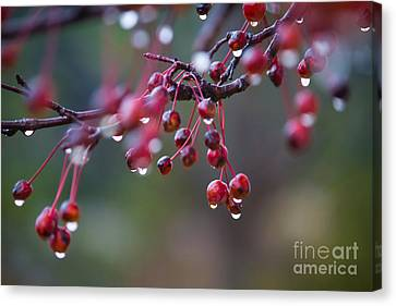 Crabapples In The Mist Canvas Print