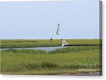 Crabber Canvas Print by David Jackson