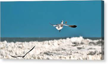 Canvas Print featuring the photograph Cracker Tracker by DigiArt Diaries by Vicky B Fuller