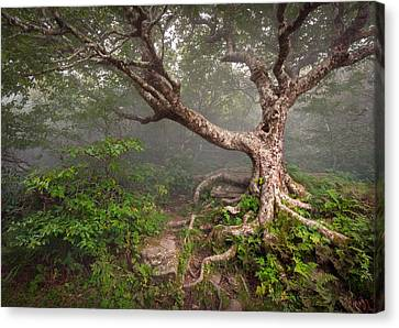 Creepy Canvas Print - Craggy Gardens Blue Ridge Parkway Asheville Nc - Enduring Craggy by Dave Allen
