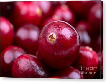 Cranberry Closeup Canvas Print