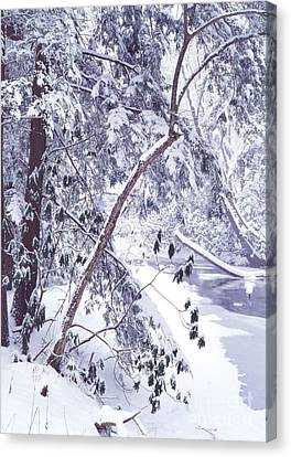 Cranberry River Deep Snow Canvas Print by Thomas R Fletcher