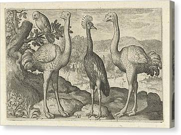 Crane Between Two Ostriches, Print Maker Nicolaes De Bruyn Canvas Print by Nicolaes De Bruyn And Nicolaes De Bruyn And Francoys Van Beusekom