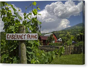 Crane Creek Vineyard Canvas Print by Debra and Dave Vanderlaan