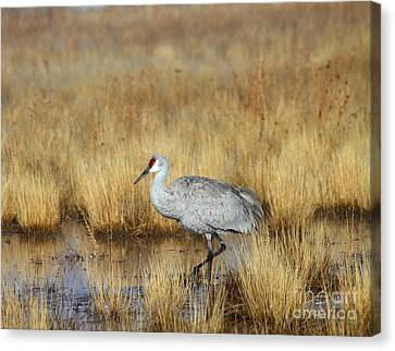 Canvas Print featuring the photograph  Solitary Crane In The Field by Ruth Jolly