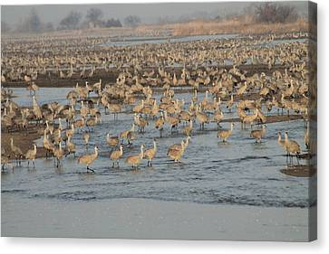 Crane River Canvas Print