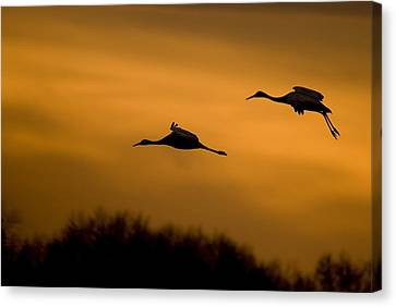 Cranes At Sunset Canvas Print by Larry Bohlin