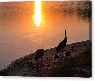 Cranes At Sunset Canvas Print by Zina Stromberg