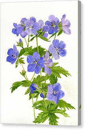 Geranium Canvas Print - Cranes Bill Wild Geraniums by Sharon Freeman