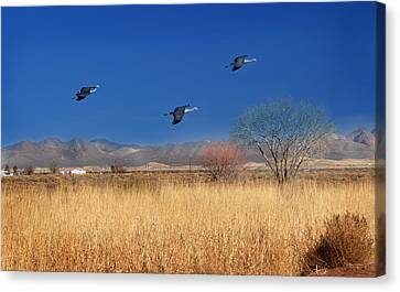 Canvas Print featuring the photograph Cranes In Flight by Barbara Manis
