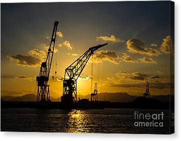 Cranes In The Sunset Canvas Print by David Hill