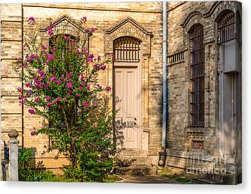 Crape Myrtle And Gonzales County Jail Museum Canvas Print by Silvio Ligutti