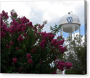 Crape Myrtle And Water Tower Canvas Print