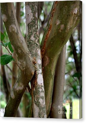 Canvas Print featuring the photograph Crape Myrtle Branches by Peter Piatt