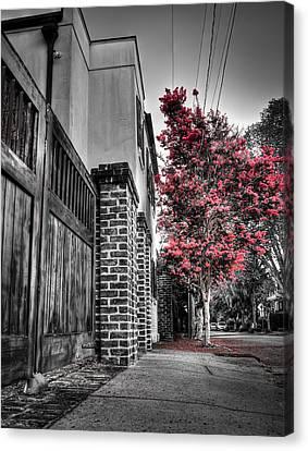 Crape Myrtles In Historic Downtown Charleston 2 Canvas Print