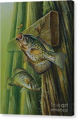 Crappie And Bridge Support Canvas Print by Jon Q Wright