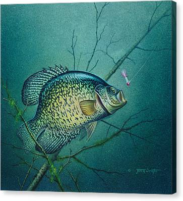 Crappie And Pink Jig Canvas Print by Jon Q Wright