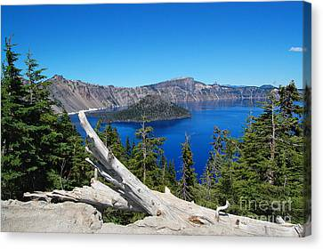 Crater Lake And Fallen Tree Canvas Print by Debra Thompson