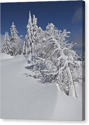 Canvas Print featuring the photograph Crater Lake Trees 2 by Todd Kreuter