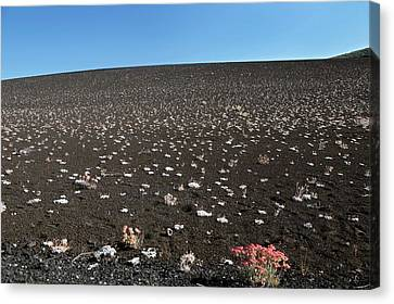 Craters Of The Moons Plants Canvas Print by Jim West