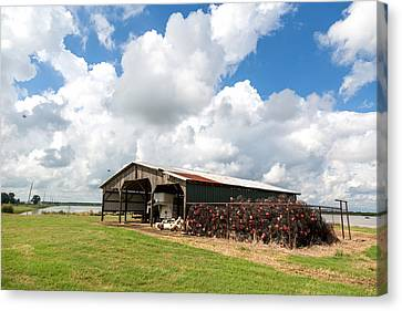Crawfish Farm With Nets Canvas Print