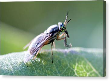 Crazy-eyed Fly Canvas Print