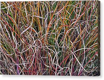 Canvas Print featuring the photograph Crazy Grasses by Judy Wolinsky