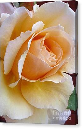 Creamy Pastel Orange Rose Canvas Print