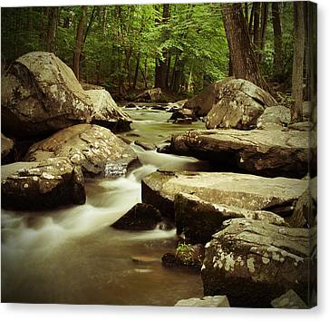 Creek At St. Peters Canvas Print by Michael Porchik