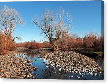 Creek Bed Canvas Print by David Taylor