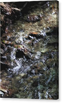Creek Bed Canvas Print by William Norton