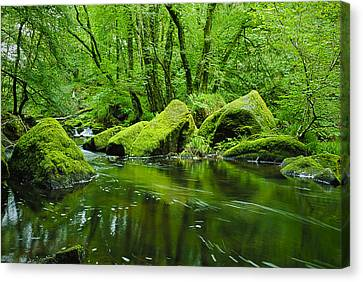 Creek In The Woods Canvas Print by Chevy Fleet