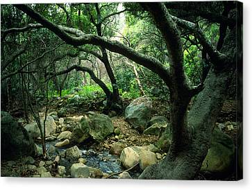 Creek In Woods Canvas Print by Kathy Yates