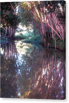 Creek Magic Canvas Print