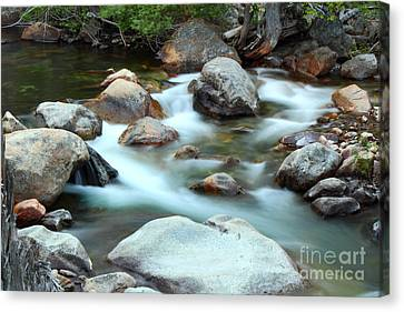 Creek Canvas Print by Michele Messina