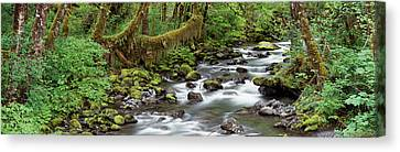 Creek Olympic National Park Wa Usa Canvas Print by Panoramic Images