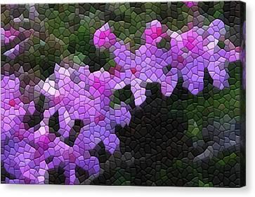 Creeping Phlox Canvas Print
