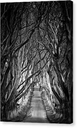 Creepy Dark Hedges Canvas Print by Nigel R Bell