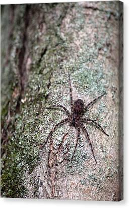 Creepy Spider Canvas Print by Karol Livote