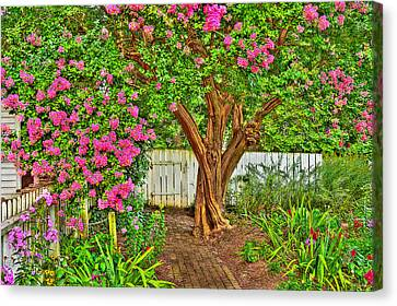 Canvas Print featuring the photograph Crepe Myrtle In Wiliamsburg Garden by Jerry Gammon