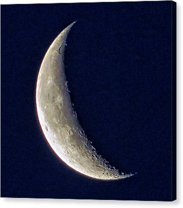 Crescent Moon 2 Canvas Print by Brian Maloney