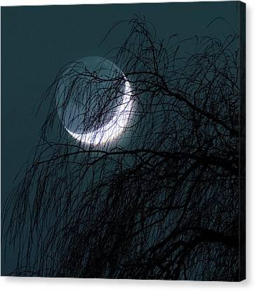 Crescent Moon Behind A Tree Canvas Print by Detlev Van Ravenswaay