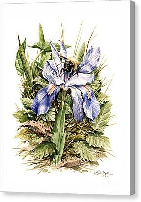 Canvas Print featuring the painting Crested Dwarf Iris by Bob  George